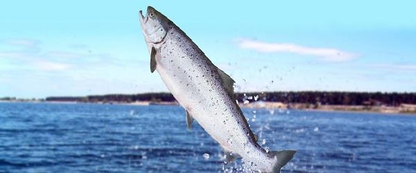 Videreutdanning innen akvamedisin og akvakultur